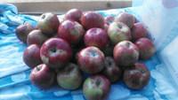 Valentine Apples
