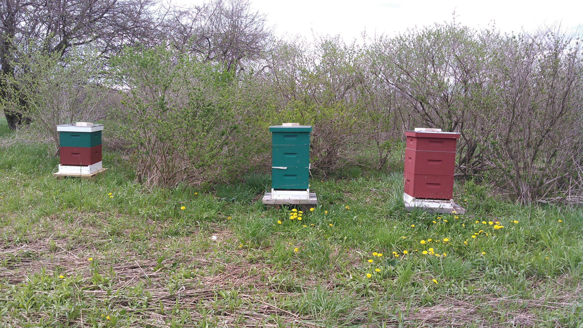 Owls Landing Farm Honey